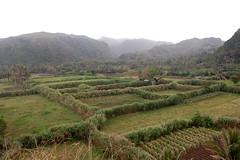 DSC_1349 (bugoybikers) Tags: landscape hedges