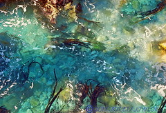 Ocean Abstract (jrtce1) Tags: ocean art photography photo bigsur tidepool jrtce1