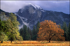Tree in meadow below Half Dome in Fall, California (enlightphoto) Tags: above autumn light sky cloud mountain storm west tree fall nature rock stone america season landscape outside outdoors golden high scenery view natural cloudy seasonal scenic meadow grand landmark icon sierra foliage ridge explore american valley yosemite western summit land halfdome vista environment yosemitenationalpark geology enduring climate height rugged clearing pristine geological abigfave frhwofavs garycrabbe enlightenedimages enlightphotocom