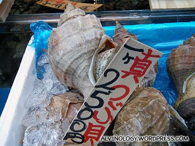 Giant shellfish