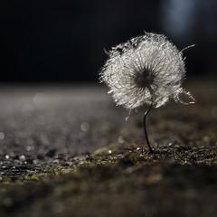 _DSC6752 (Anton.Ymer) Tags: flower home found spring powmerantusenord