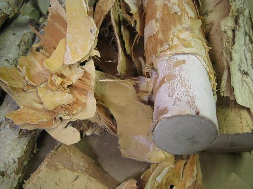 bark peeled from paperbark limb