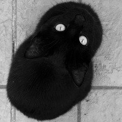 Black Shape (Village9991) Tags: black yellow cat eyes golia