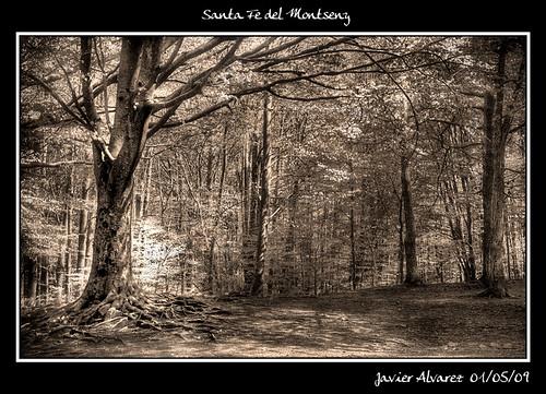 Santa-Fe-del-Montseny-(3)