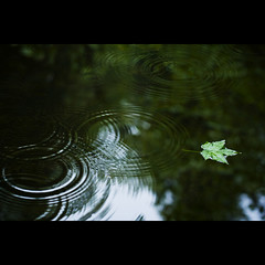 intersecting concentric. (kvdl) Tags: morning reflection green rain leaf pond bokeh surrey zen concentric concentriccircles intersecting tynehead tyneheadpark kvdl