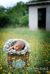 Baby in the Rye (Alison Waring) Tags: baby texas babygirl newborn roundrock yellowflowers naturallightphotography abandonedshed butterflybasket knitbabysack