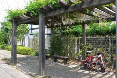 狸塚の藤棚