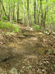 New Blue trail in the Frederick Watershed
