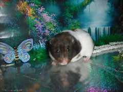 """I'm in Paradise!!""-Callie (AlohiMauie) Tags: flowers brown white tree cute butterfly paradise tan adorable calico hamster callie hammy hamham hammie"