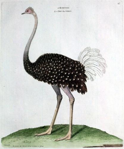 bird201-834x1000