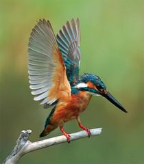 #445  (John&Fish) Tags: wild bird nature wow taiwan best firstplace brava featheryfriday lesamisdupetitprince greatshotss photographymypassion