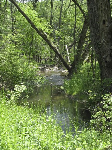 Originally, the Scanlon Creek area was colonized by early settlers.