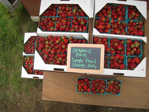 Week One Local Strawberries