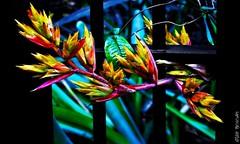 It's A Breakout ! (Wilder PhotoArt) Tags: flowers sensational botanicalgarden