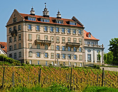 Castle within a Vineyard (Habub3) Tags: travel vacation holiday building castle architecture buildings germany deutschland photo vineyard nikon europa europe explore architektur schloss bodensee reise kirchberg weinberg d300 lakeconstanze habub3