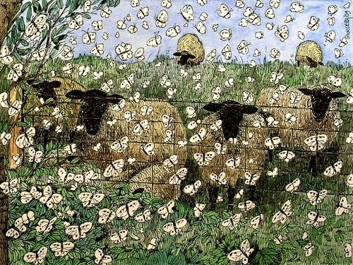 sheep looking (challenge)