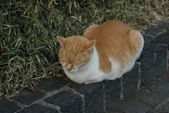 上野公園の猫その2