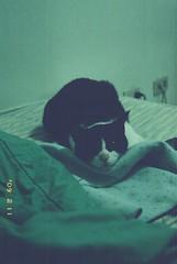 * (chunichiu) Tags: cats kodak natura gold200 classica