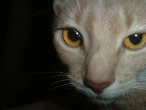 Well, Hello Handsome Pharaoh