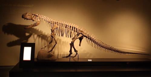 ¡Dinosaurios! (III)