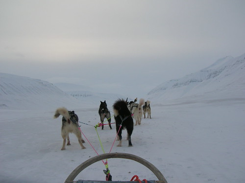Me, the dogs and the glacier...
