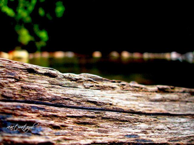 view-shot-atas-permukaan-kayu-balak