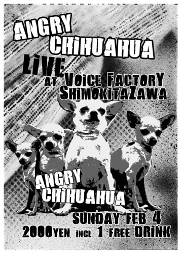 Angry Chihuahua Live Poster