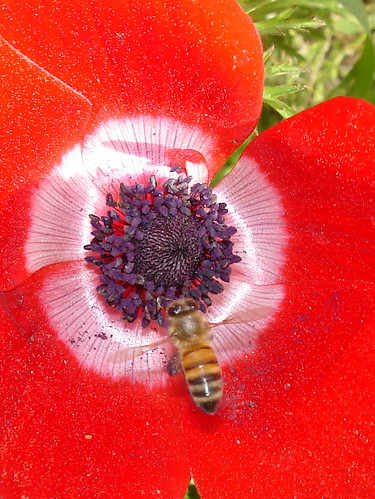 Bee on red