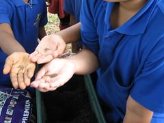 plant experiment (grace_kat) Tags: seeds soil sowing