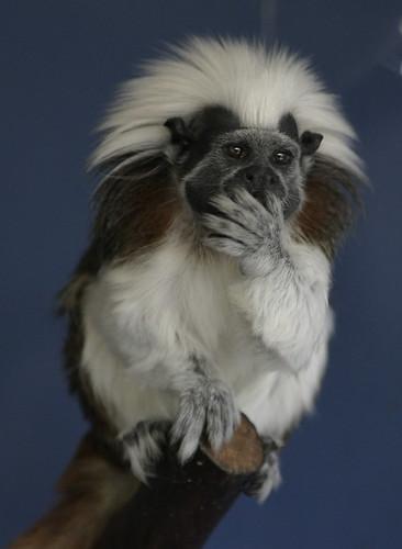 Thoughtful Monkey