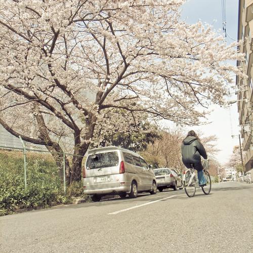 R0014828 : Sakura2009 #19