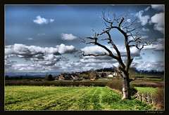 Tree with a view (Andy Coe) Tags: trees tree nature shadows sony sunny bluesky alpha hdr rotherham southyorkshire a700