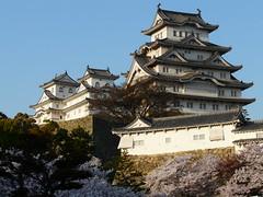 P1010568 (rs_the_rs) Tags: japan cherry blossoms himeji hanami kirschbluete