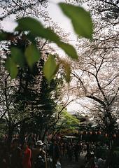 hanami 2009 (++Naho++) Tags: ueno hanami cerezo