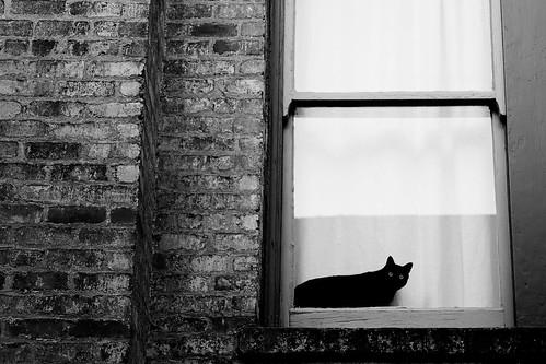 Kitty Meow [104/365]