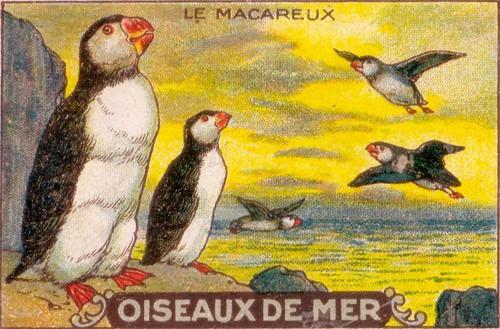 oiseaux de mer 9