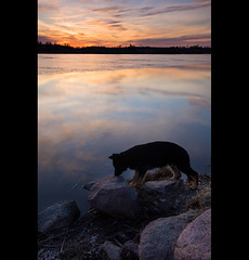Wonderer (Nina_999) Tags: sunset dog lake ice water canon finland spring melt germanshepherd naturesfinest eos5d wonderer