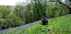 Sitting in the bluebells (eleda 1) Tags: blue bluebells spring bluecarpet woodlandwalk forasfarastheeyecansee