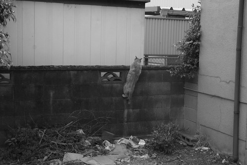 Today's Cat@20090504