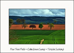 Four Tree Field - Calm Nature Scene - Tayside Scotland (Magdalen Green Photography) Tags: green nature scotland cool scottish calm tayside coolgreen fourtrees dsc7915 calmnaturescene iaingordon fourtreefield
