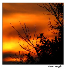 Sunset in Alanya (Ozgurmulazimoglu) Tags: light sunset sea orange tree silhouette turkey landscape evening mediterranean antalya deniz alanya akdeniz gnbatm sar aa glge k akam gn silet alemdagqualityonlyclub