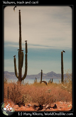 Vultures, trash and cacti