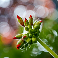 I wish I was special (irene gr) Tags: flowers light red macro green square bokeh olympus 11 explore dots zuiko e30 43 zd fourthirds 1454mm f2835 zuikodigital 1454mmii irenegr originalshotting