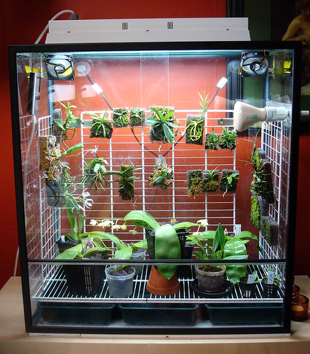 Warm vivarium in the orchid growing room