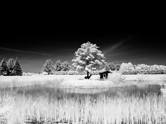 the.pond (jonathancastellino) Tags: tree delete10 reeds delete9 ir delete5 delete2 pond delete6 delete7 save3 delete8 delete3 delete delete4 save save2 whitby infrared cullengardens