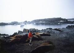 Elephant Seals (rona.h) Tags: elephantseal cloudnine palmerstation ronah anversisland vancouver27 bowman57
