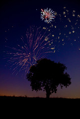 The Tree: Fireworks (MattGerlachPhotography) Tags: summer sky usa night star unitedstates fireworks explosion pop boom july4th 4thofjuly independenceday bam lonetree atree nationalholiday multiexposure thetree huntingtonindiana huntingtoncounty mattgerlachphotography