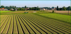 Flanders fields (jackfre2 (on a trip-voyage-reis-reise)) Tags: road blue trees houses sky tractor green lines truck boom roofs crop fields farms agriculture willebroek lkw coth aplusphoto platinumheartaward