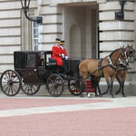 Horse (Cleveland Bay) Drawn Brougham Carriage, Buckingham Palace, Westminster, London thumbnail