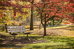 Wood Bench and Tree (Jason Christopher) Tags: autumn color fall sunshine landscape outdoors landscapes countryside kentucky peaceful parkbench redleaves greengrass flowersplants ruralscenes colorphotograph hopkinsville horizontalphoto remotelocations